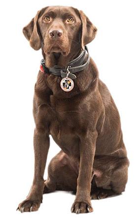 Apollo Rettungshundestaffel Bergisches Land