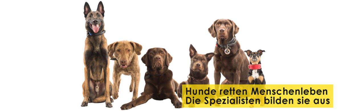 Rettungshundestaffel Bergisches Land e.V. Startseitenbanner