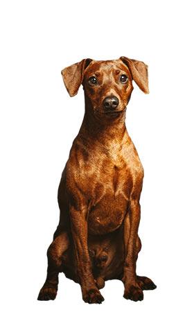Thyron Rettungshundestaffel Bergisches Land e.V.