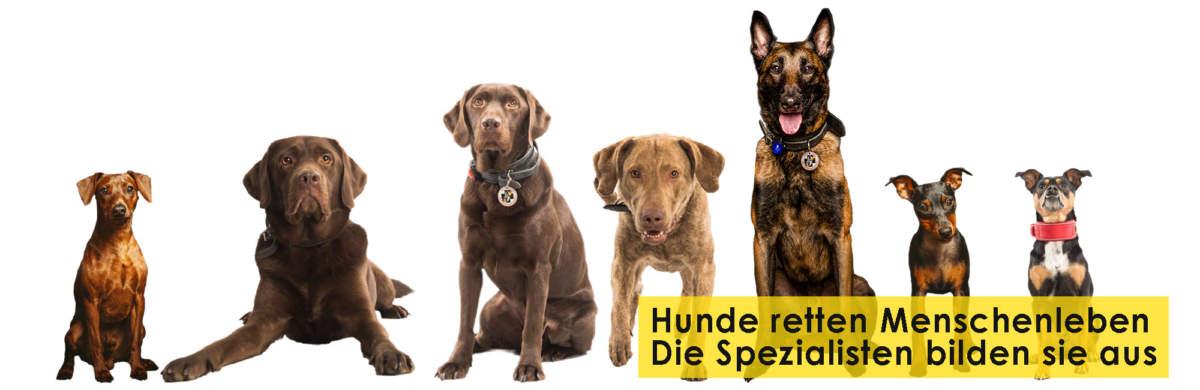 Rettungshundestaffel Bergisches Land e.V. Titelbild Startseite